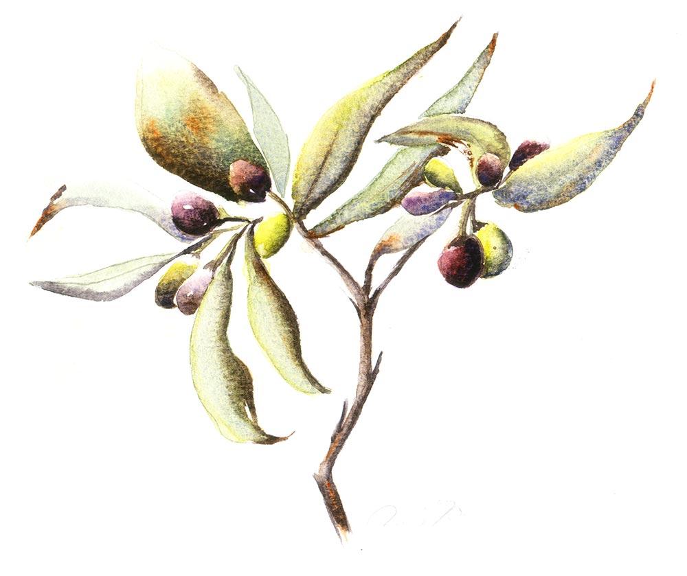Ud over Toscanas bjerge, små bjerglandsbyer og større byer, som Vence og Lucca, med deres traditionelle italienske byggestil, så er de store mængder oliven også meget inspirerende at male.