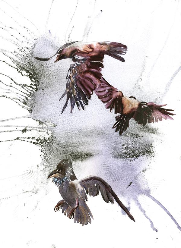 Krager og alliker